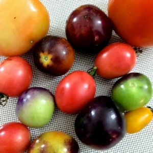 Red, black, green and yellow tomatoes