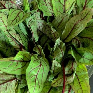 Red veined sorrel