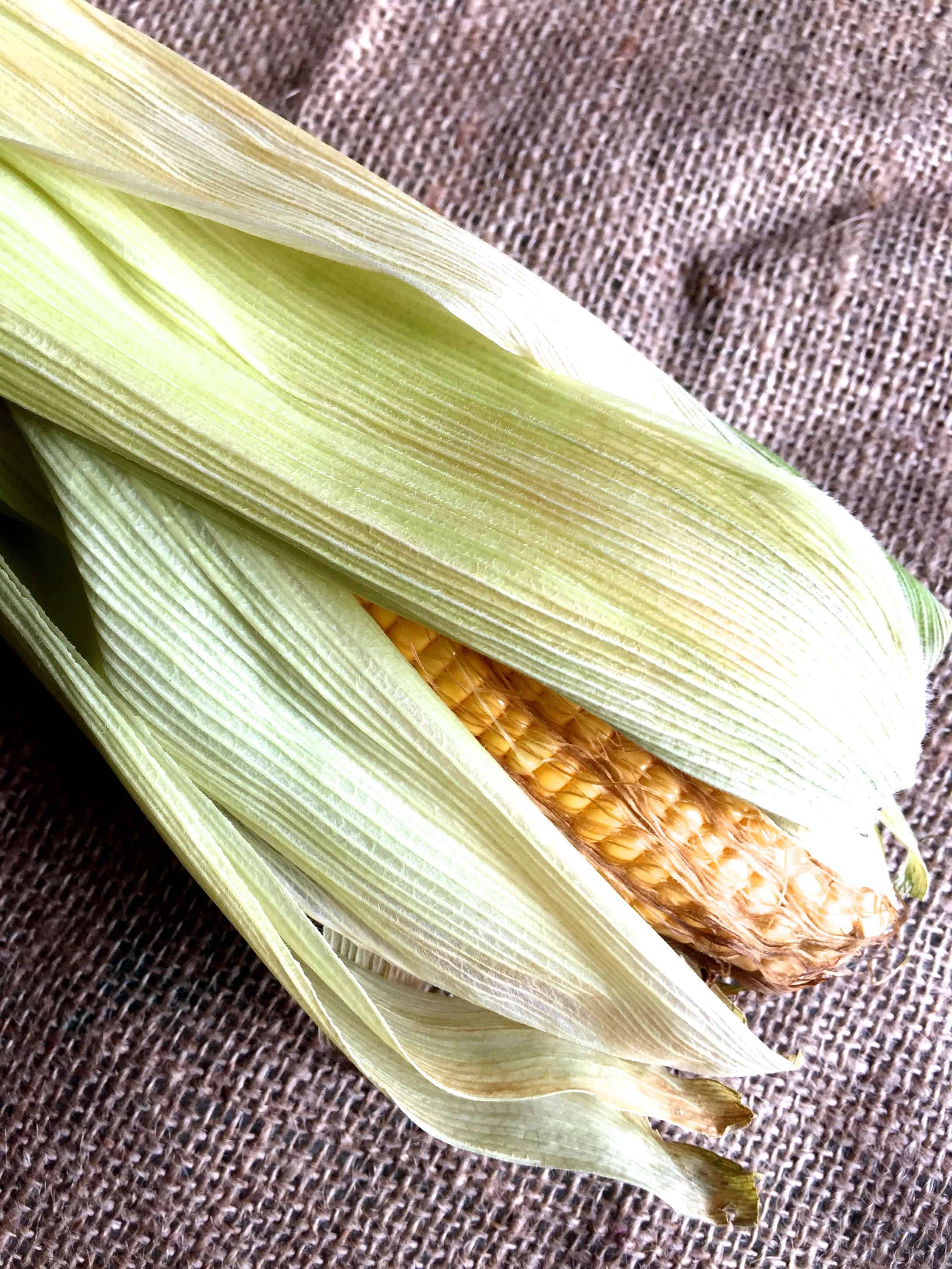 Fresh corn on a pice of sacking