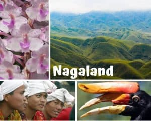 Collage of the Indian State of Nagaland, showing large pinkish white flowers, a green and blue mountain landscape, Men wearing a typical Naga headress, and a group of hornbills with large orange beaks
